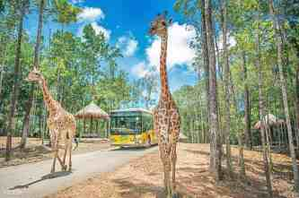 Kinh nghiệm tham quan Safari Phú Quốc dành cho người lần đầu đến Phú Quốc