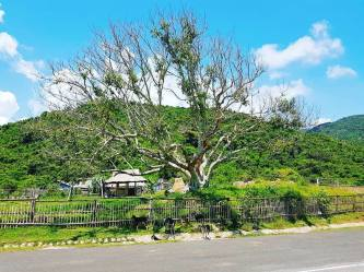 Bỏ túi kinh nghiệm du lịch Phú Yên tự túc từ A đến Z