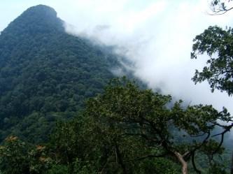 Top 13 bài văn tả cảnh đẹp của núi, rừng hay nhất