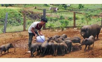 Chuyển biến tích cực trong công tác giảm nghèo ở Kon Plông