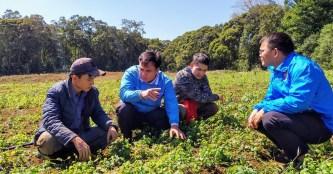 Trồng cây dược liệu ở huyện nghèo Kon Plông