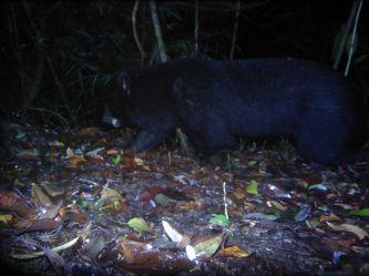 Bảo tồn đa dạng sinh học rừng Kon Plông gắn liền với phát triển sinh kế bền vững