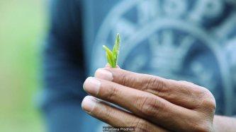 Về Trị An nghe bàn tay thơm mùi cỏ lau