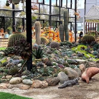 Khám phá vườn sen đá - xương rồng độc lạ nhất Đà Lạt