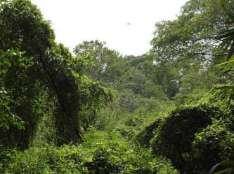 Vườn Chim độc đáo giữa lòng thành phố Cà Mau