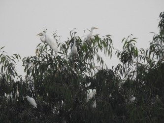Lão nông 15 năm 'nuôi' chim trời trong khu vườn độc đáo nhất Tây Ninh