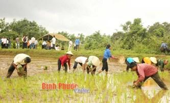 Long An: Lưu giữ nghề truyền thống làm trống ở Bình An