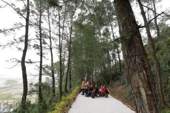 Ẩn mình giữa rừng thông CHỐN AN YÊN MỚI CỦA GIỚI TRẺ ngay gần Hà Nội